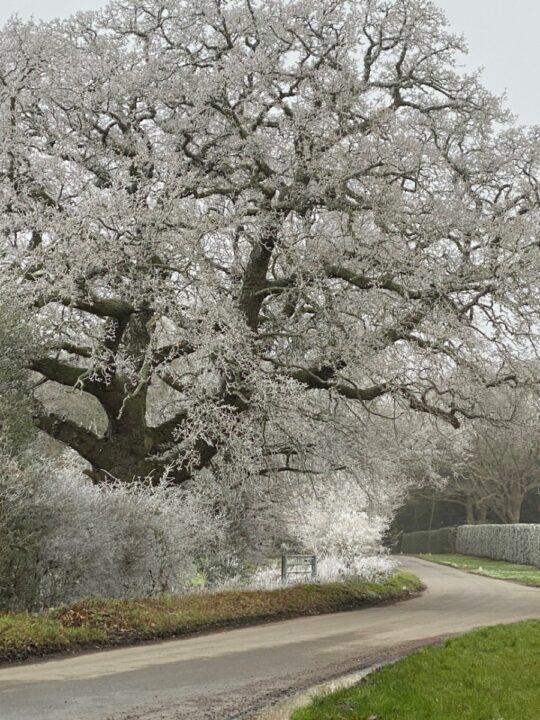 Park Farm, Hundred Acre Lane, Wivelsfield Green, frost